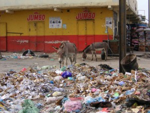 No shortage of foraging donkeys in Nouakchott